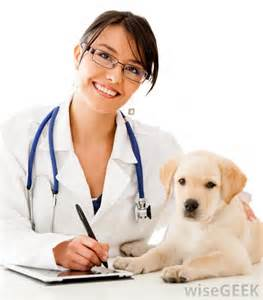 free animal clinic what does a veterinarian do with pictures