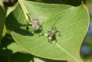 Virginia Garden Insects