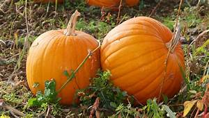 Pumpkin, Party, Games, For, Kids
