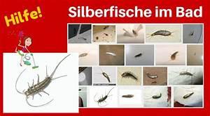 Silberfische Bekämpfen Tipps : die besten 25 silberfische in der wohnung ideen auf pinterest sauberer duschschimmel ~ Markanthonyermac.com Haus und Dekorationen