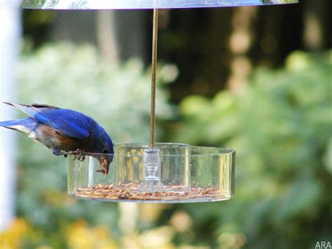 Simple Ways To Attract Birds To Your