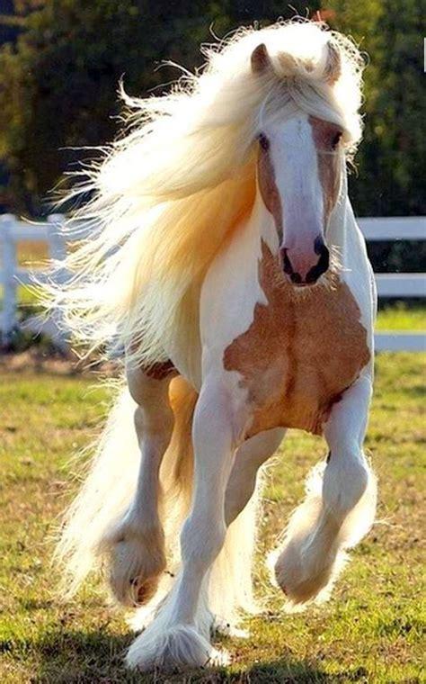 horse horses breeds most caballos pretty cute gypsy hermosos lindos spectacular hair breed chevaux animal bonitos los 2d mignon guardado