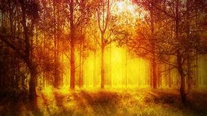 Add, A, Warm, Atmosphere, Effect, To, A, Forest, Image, With