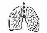 Lungs Coloring Lung Printable Human sketch template