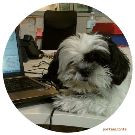 animali in ufficio in ufficio con il mio in quali aziende si pu 242 portare