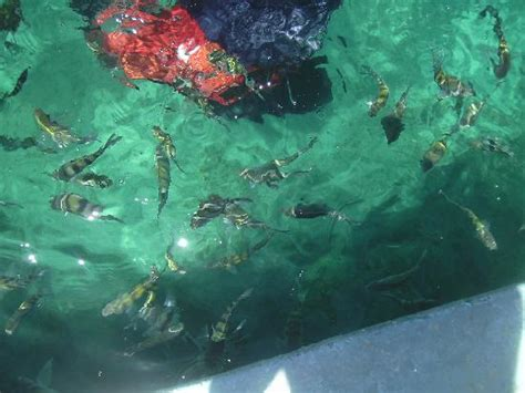 Glass Bottom Boat Cayo Coco by Glass Bottom Boat Picture Of Tryp Cayo Coco Cayo Coco