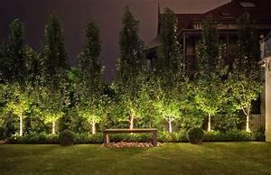 Ornamental pear trees driveway gardens