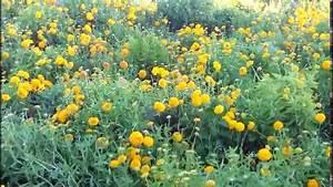 Amazing Nature Flower Garden Full Hd 1080p Youtube ...