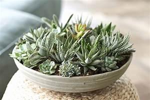 Plantes Grasses Intérieur : plante d 39 int rieur du mois les plantes grasses ~ Melissatoandfro.com Idées de Décoration