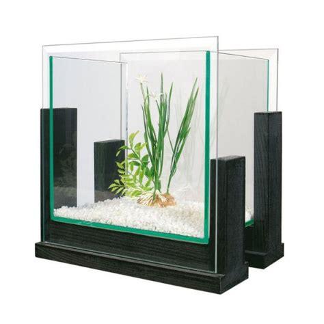aquarium ideal pour combattant aquarium aqua bamboo slim