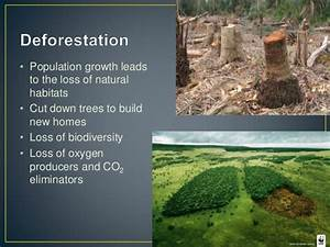 Human Activities That Affect Natural Ecosystems