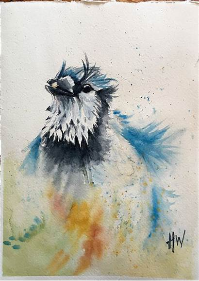 Watercolor Painting Paintings Bluejay Birds Ct Artistic