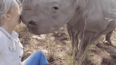 rhino  tumblr