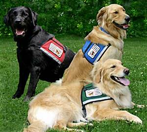 best dog breeds to use for service and therapy