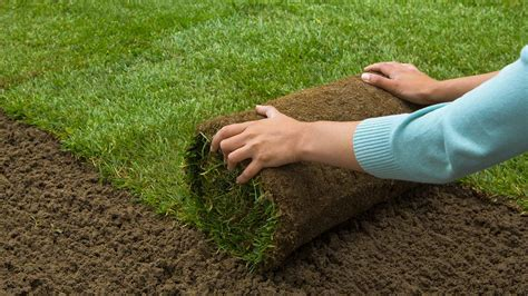 lawn laying cost how much does grass sod cost prices installation