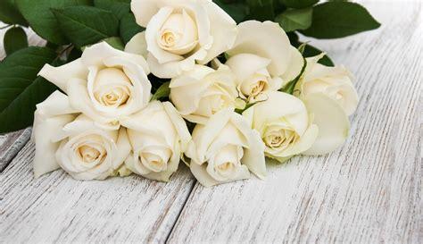 gambar bunga mawar bunga matahari bunga sakura