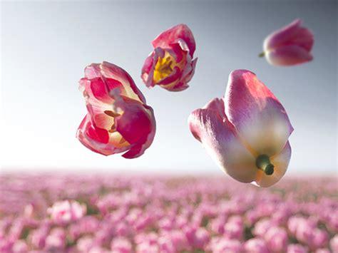 doorschijnende bloemen zwevende powerbloemen mooi wat bloemen doen