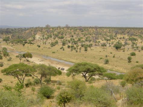 Savanna — Vikipēdija in 2020   Plains landscape, National ...