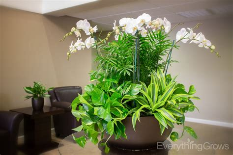designer plants interior landscaping by everything grows