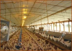 Farm Chicken Eggs - WeSharePics