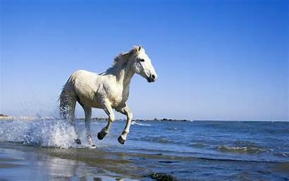 Horse Wallpapers Camargue 1200 Horses Desktop Ultra