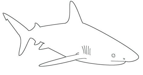 shark template free shark template by dragonlove12345 on deviantart