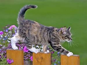 Katze Im Haus Halten : wie halten katzen ihr gleichgewicht ~ Lizthompson.info Haus und Dekorationen