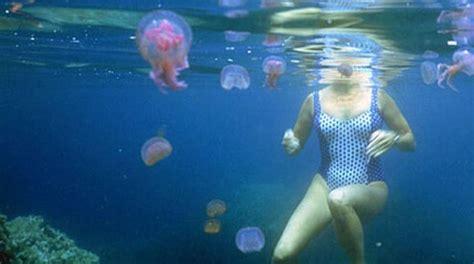 faire des plans de cuisine piqûres de méduse le remède de grand mère rapide et efficace