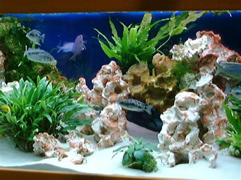 decoration d aquarium d eau douce decoration aquarium eau douce