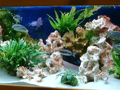 decoration pour aquarium d eau douce decoration aquarium eau douce
