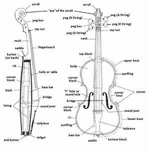 Diagram Of A String Instrument