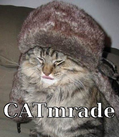 Russian Cat Meme - russian maze russian cat memes get image 1861947 by samantha22 on favim com