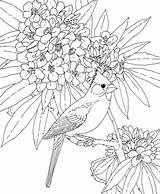 Bird Cardinal Flower Virginia West Rhododendron Coloring Pages Supercoloring Birds Printable Colouring State Adult Version sketch template