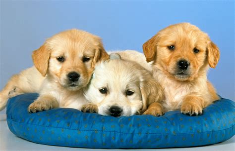 dog animals pictures high quality wallpapers