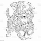 Coloring Dachshund Dog Pirate Costume Vector Animal Illustration Markings Ukraine Beagle Beauty sketch template