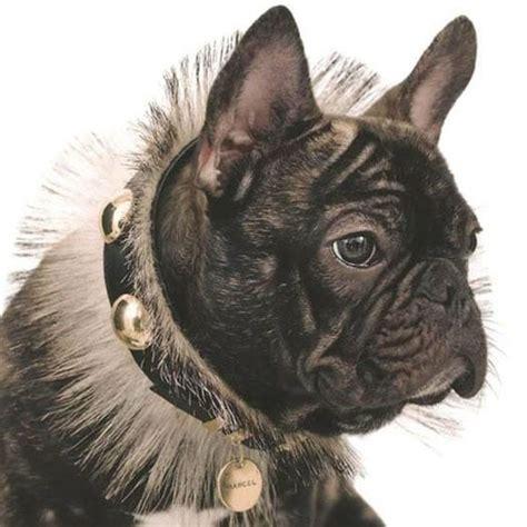 marcel nars french bulldog beauty model dies popsugar