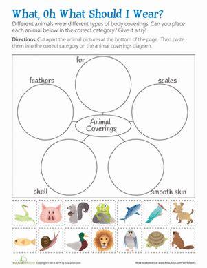 animal body coverings worksheet education com