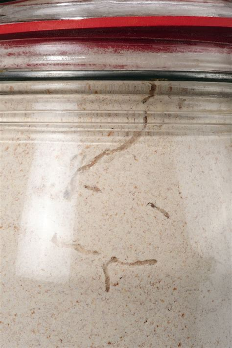 How to get rid of pantry moths   PestXpert ? PestXpert