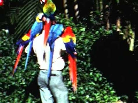 parrot jungle miami fl  home  footage youtube