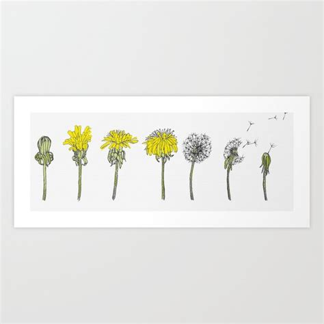 Dandelion Lifecycle Art Print By Trixibelle Society6