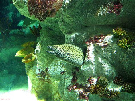 l aquarium de montpellier languedoc roussillon photographies hdr kizone net