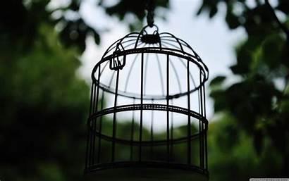Bird Cage Ultrahd Dea Linea Vai Allo