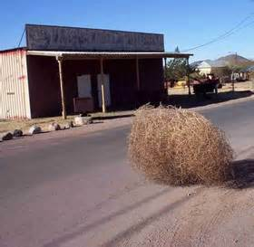 Image result for Rolling Tumbleweed in Desert