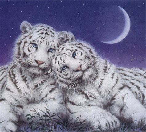 desktop backgrounds  fantasy cats
