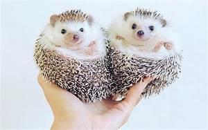 Cute Animals On... Cute Animals