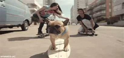 Dog Skate Funny Giphy Animated Longboard Gifs