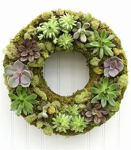Robuste Zimmerpflanzen Groß : pflegeleichte zimmerpflanzen die auch sehr frisch und sch n aussehen ~ Sanjose-hotels-ca.com Haus und Dekorationen