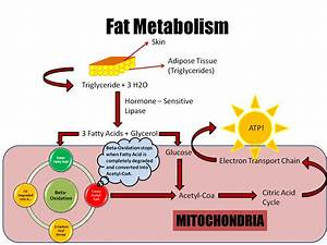 April Seven  What You Should Know About Metabolism