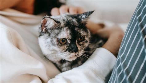 Kā pārliecināties, vai kaķu terapija palīdz pret ...