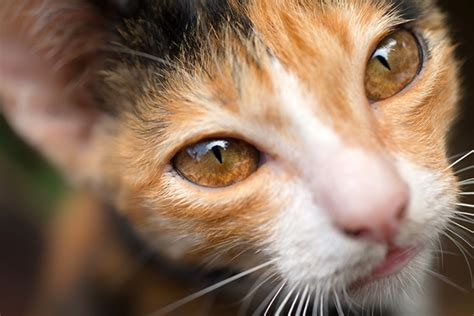 kitten eye color 4 cool facts about cat catster
